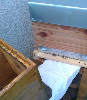 Transfert de la ruchette vers la ruche