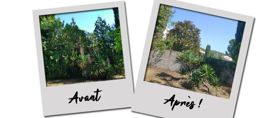 Abattage Thuyas, Effeuillage Yuccas