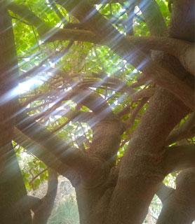 reflet rayon de soleil