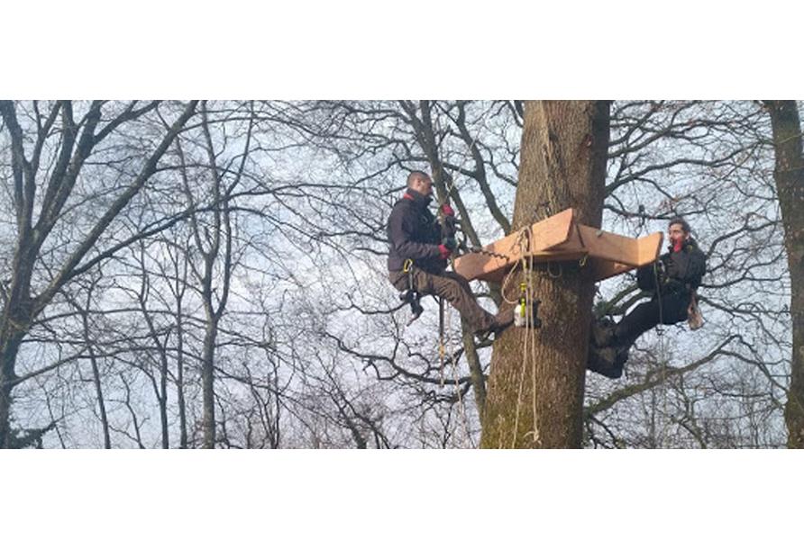 Comment s'ancrer dans les arbres ?