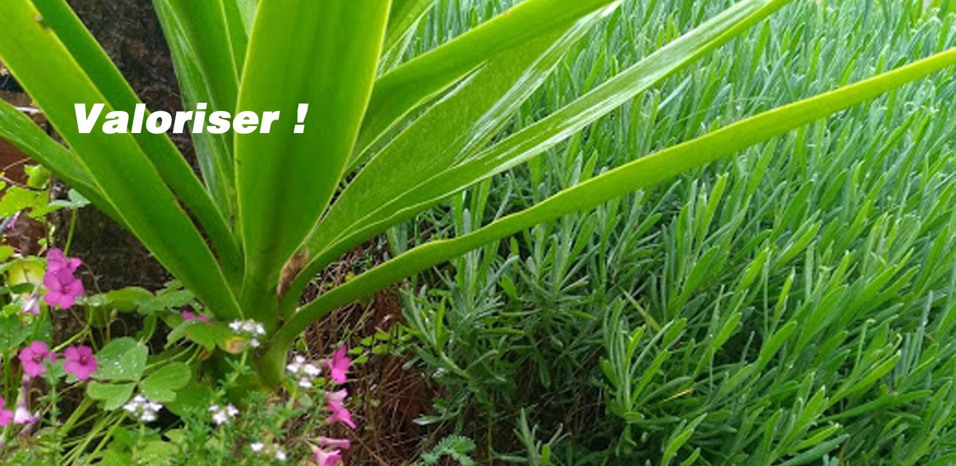 Valoriser vos maisons et vos espaces verts